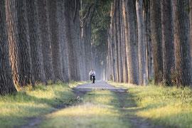 Fahrradweg nahe Brügge, Belgien.
