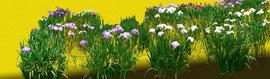 菖蒲図 iris 900 x 3000 mm                    ©Masanori Omae