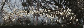 木蓮2 magnolia 2  600 x 1800 mm                 ©Masanori Omae