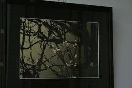 梅 Japanese apricot  297 x 420 mm                ©Masanori Omae