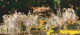 二の丸公園 Ninomaru-garden 520 x 1156 mm           ©Masanori Omae