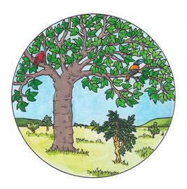 Dieser Baobabbaum gerört zu einem Buch mit Märchen aus Madagaskar