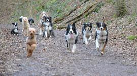... es gibt auch brave Hunde die Warten ...