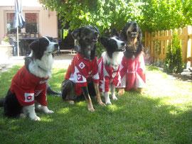 Mainz 05 Fans