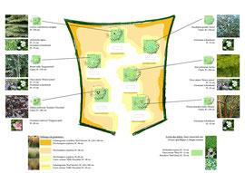 Plan de plantation Epitaphe végétale