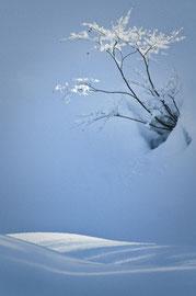 雪の華 dpc1 2010年3月号「入選」