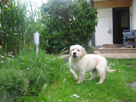 Barney Dunkelblau zu Hause im Westerwald