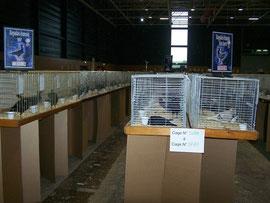 Les cages