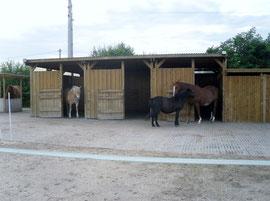 Stall und Paddock