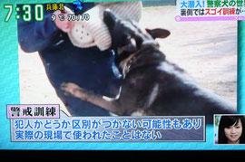 警戒 ガイヤ号(ゴンの同胎犬)直轄犬