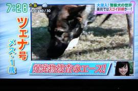 ツェナ号(ゴンの妹)直轄犬