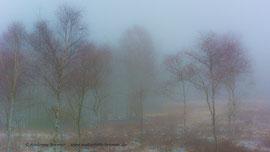 Hochmoor Mecklenbruch bei Silberborn im Solling