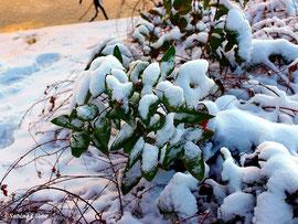 Herrlicher Winter