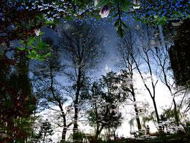 Reflet-arbre