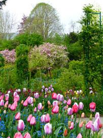Pommier et tulipes - P1080268