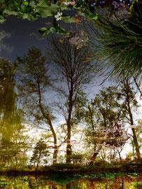 Reflet arbre 2