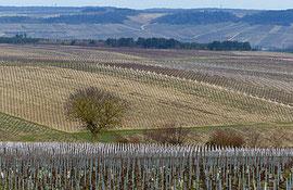 Vigne 4 - P1020115-1