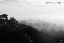 Brume Dordogne - P1070918