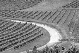 Les vignes - P1060978