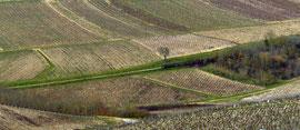 Vignes 3 - P1020117-1