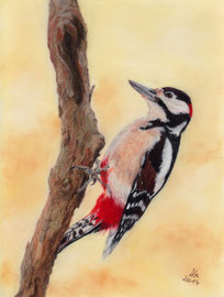 180 €  spotted woodpecker, pastel on pastelmat, 20 x 27 cm, reference photo Julian Rad