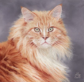 """Oscar"", Maine Coon cat, pastel on pastelmat, 20 x 20 cm, reference photo Jorbasa Fotografie"
