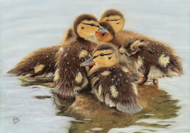 """ducklings, pastel on pastelmat, 28 x 40 cm, reference photo """"skeeze"""", pixabay; honourable mentions at PGE's """"Get Dusty"""" , 04/2017; SOLD!"""