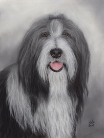 """Skyla"", Bearded Collie, pastel on pastelmat, 30 x 40 cm, commission"
