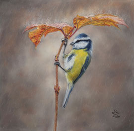 """under the umbrella"", blue tit, pastel on pastelmat, 28 x 28 cm, reference photo Menno Schaefer, wildlifereferencephotos; SOLD"