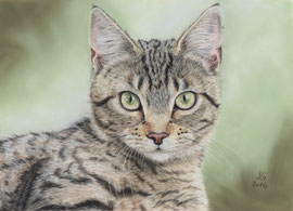 """Wilma"", pastel on pastelmat, 20 x 28 cm,  commission, reference photo Phil Larsen"