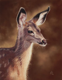 350 €  Young fallow deer,  pastell on pastelmat, 29 x 37 cm, reference photo Lenora Melville