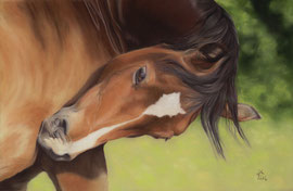 Welsh Section D mare, pastel on pastelmat, 25 x 39 cm, reference photo Laura Davies