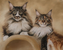"""Zazzels Paw + Zora Lee"", Maine Coons, pastel on pastelmat,  40 x 50 cm, commission"