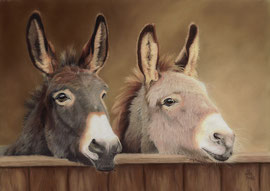 380 €  Donkeys, pastel on pastelmat, 28 x 40 cm, reference photo Melanie van de Sande, pixabay