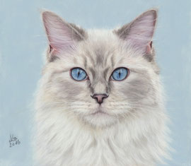 """Moorka"", ragdoll cat, pastel on pastelmat, 21 x 24 cm, reference photo Galyna Lee; SOLD!"