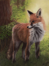 "350 €  Fox in the woods, pastel on pastelmat, 30 x 39 cm, reference photo (fox) ""monicore"", pixabay"