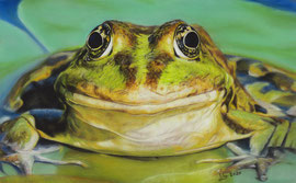 frog, pastel on pastelmat, 18 x 29 cm, reference photo couleur, pixabay