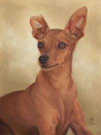 """""""Amy"""", miniature pinscher, pastel on pastelmat, 29 x 39 cm, commission"""