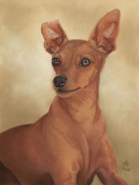 """Amy"", miniature pinscher, pastel on pastelmat, 29 x 39 cm, commission"
