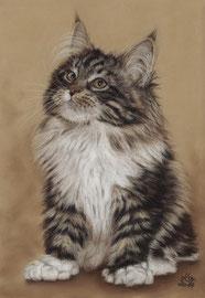 """Sylvester"", Maine Coon, pastel on pastelmat, 21 x 30 cm,  commission"