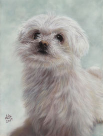 """Gini"", Maltese Dog, pastel on pastelmat, 20 x 28 cm, commission"