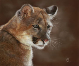 """Shining"", mountain lion,  pastel on pastelmat, 24 x 29 cm, reference photo Jitze Couperus"