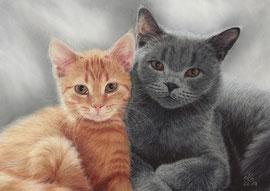 """Marie + Kimba"", British short hair, pastel on pastelmat, 20 x 29 cm, commission"
