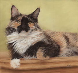 """""""Puffy"""", Maine Coon, pastel on pastelmat,  30 x 30 cm, commission"""