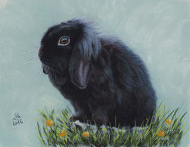 dwarf rabbbit, pastel on pastelmat, 20 x 25 cm, reference photo Marcel Langthim, pixabay; SOLD!