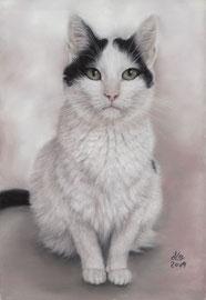 """Felina"", pastel on pastelmat, 20 x 30 cm, commission"
