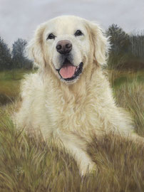 """Laika"", Golden Retriever, pastel on pastelmat, 30 x 40 cm, commission"