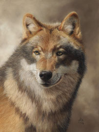 """Ninjo"", grey wolf, pastell on pastelmat, 30 x 40 cm, commission"