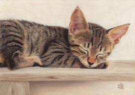 Tabby kitten, pastel on pastelmat, 20 x 28 cm, reference photo Bernfried Schnell