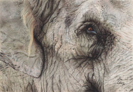 Elephant's eye, pastel on pastelmat, 15 x 22 cm, commission, reference photo Leonardo Barbosa, pixabay